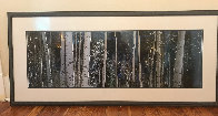 White River Aspens   Panorama by Thomas Mangelsen - 1
