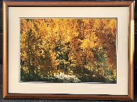Fire of Autumn - Aspens Panorama by Thomas Mangelsen - 1