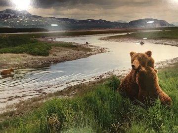 Bear River - Huge Panorama - Thomas Mangelsen