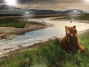 Bear River - Super Huge Panorama - Thomas Mangelsen