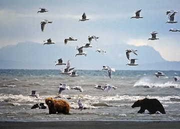 Bears With Gulls (Salmon Seekers) 2008 Photography - Thomas Mangelsen