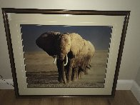 Amboseli Crossing Panorama by Thomas Mangelsen - 1