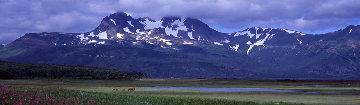 Glacier Travelers Brown Bears 2001 Panorama by Thomas Mangelsen