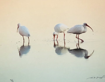 Gift of the Tides, White Ibis, Suite of 3 Photograph Prints  Panorama - Thomas Mangelsen