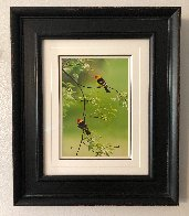 Spring Blossoms - Western Tanagers 2010 Panorama by Thomas Mangelsen - 1