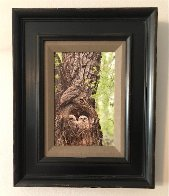 Cottonwood Hollow - Great Horned Owls 2015 Panorama by Thomas Mangelsen - 1