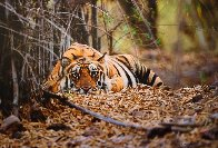 Bad Boy of the Forest Panorama by Thomas Mangelsen - 0