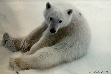 Snowflake - Polar Bear Cub 1993 Panorama by Thomas Mangelsen