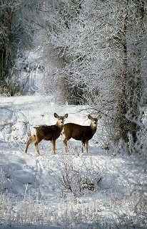 December Deer Panorama by Thomas Mangelsen