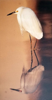 Images of Nature: Reflections - Snowy Egret 1995  Panorama by Thomas Mangelsen
