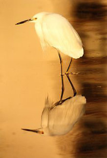 Reflections - Snowy Egret 1995 Panorama by Thomas Mangelsen