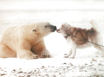 Polar Kiss Panorama - Thomas Mangelsen