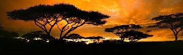 Land of the Rising Sun Panorama - Thomas Mangelsen