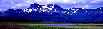 Glacier Travellers: Brown Bear  Huge Panorama - Thomas Mangelsen