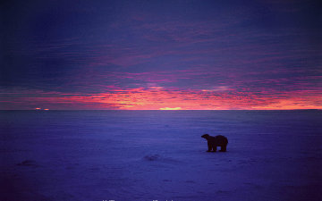 Polar Blaze Panorama - Thomas Mangelsen