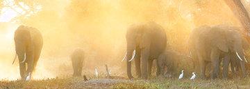 Daybreak on Amboseli Huge Panorama - Thomas Mangelsen