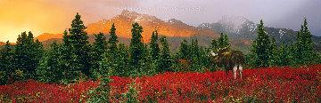A Change of Seasons 1999 Panorama - Thomas Mangelsen