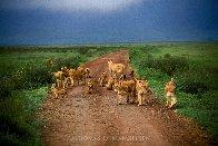 Changing Lanes 2002 Panorama by Thomas Mangelsen - 2