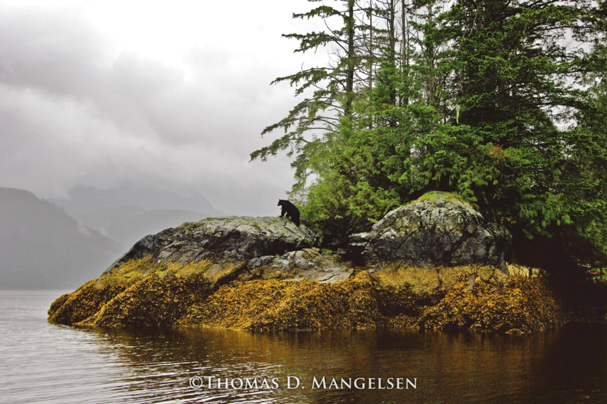 Guardian of Knight Inlet  Photography by Thomas Mangelsen
