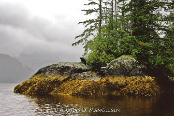 Guardian of Knight Inlet  Photography - Thomas Mangelsen