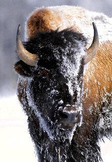 Native American Bison 1992 Huge Panorama - Thomas Mangelsen