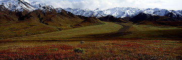 After the Ice Age - Grizzly Bear-Denali  Panorama by Thomas Mangelsen