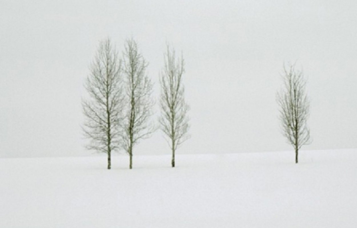 Winter Aspens   Panorama by Thomas Mangelsen