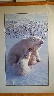 Mother's Love (Polar Bear) Huge Panorama by Thomas Mangelsen - 1