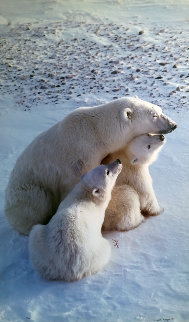 Mother's Love (Polar Bear) Panorama - Thomas Mangelsen