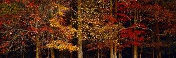 Colors of the Smokies  Panorama by Thomas Mangelsen