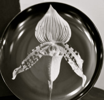 Orchid Porcelain Plate 1989 Sculpture - Robert Mapplethorpe