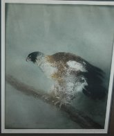 Eagle 1974 Limited Edition Print by Kaiko Moti - 2