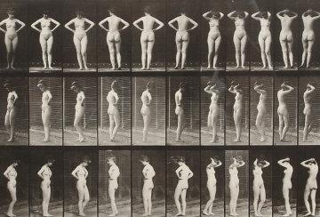 Animal Locomotion, Plate 531 Photography - Eadweard Muybridge