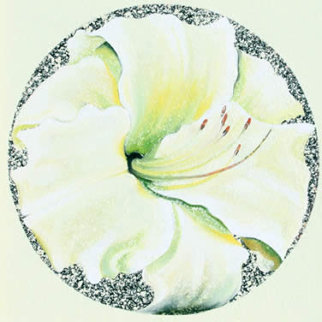 Lemon White Lily 1982 26x26 Original Painting by Lowell Blair Nesbitt