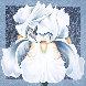 Winter Iris 1986 54x54 Original Painting by Lowell Blair Nesbitt - 0