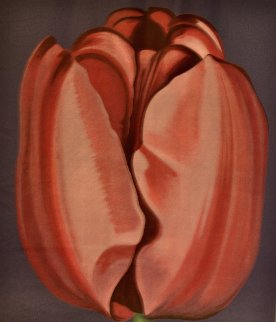 Tulip 1977 Limited Edition Print by Lowell Blair Nesbitt