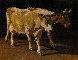 Cows 2014 39x54  Original Painting by Robert Nizamov - 0