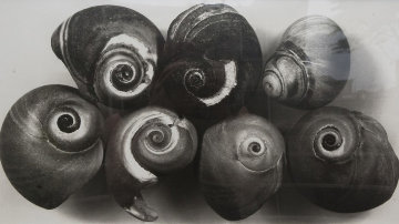 Seven Shells, New York, May 2002 Unique Photography - Irving Penn