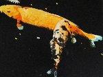 Night Sky Fish 1997 Limited Edition Print - Joseph Raffael