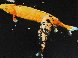 Night Sky Fish 1997 Limited Edition Print by Joseph Raffael - 0