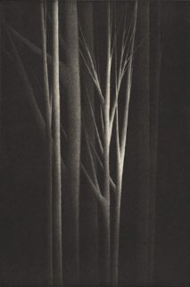 Forest Nocturne IV 2001 Limited Edition Print by Robert Kipniss