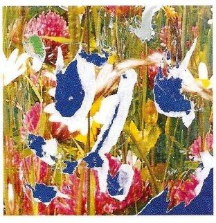 Erbario 12x12 Original Painting - Mimmo Rotella