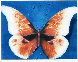 Butterfly 1988 Limited Edition Print by G.H Rothe - 0