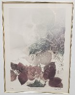 Bougainvillea 1980 Limited Edition Print by G.H Rothe - 2