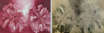 Hibiscus, and copper etching plate Limited Edition Print - G.H Rothe