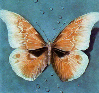 Butterfly 1988 Limited Edition Print - G.H Rothe