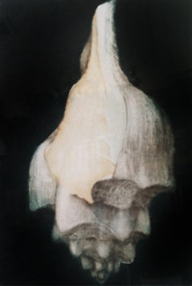 Left Winding Shell 1975 Limited Edition Print by G.H Rothe