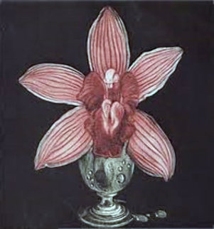 Orchid 1988 Limited Edition Print - G.H Rothe