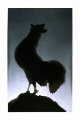 Rooster 1988 Limited Edition Print - Edward Ruscha