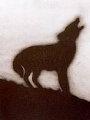 Coyote #144 Limited Edition Print - Edward Ruscha
